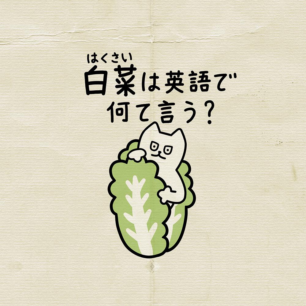 白菜 | 英会話イラスト